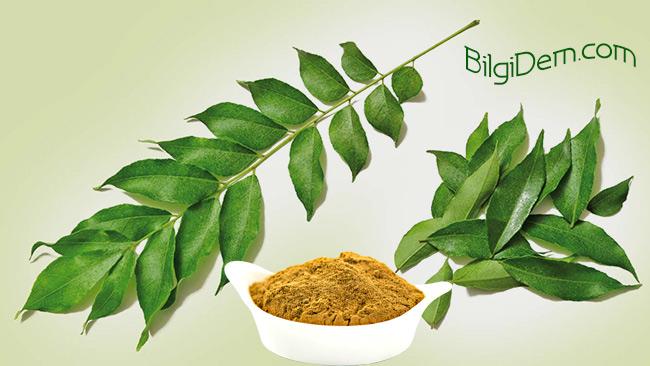 Köri-Curry-Köri Yaprağı-Kadi Patta- Köri'nin Yararları