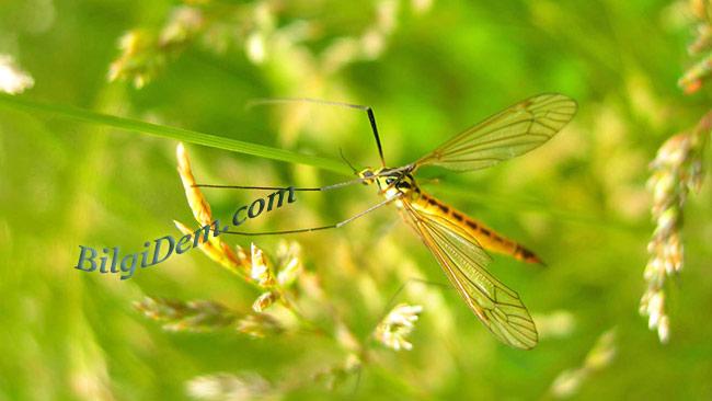 Sivrisinek ısırıkları için çözümler