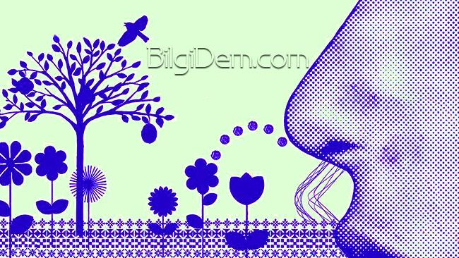 Mevsimsel Alerji İle Mücadele İçin 8 Muhteşem Gıda