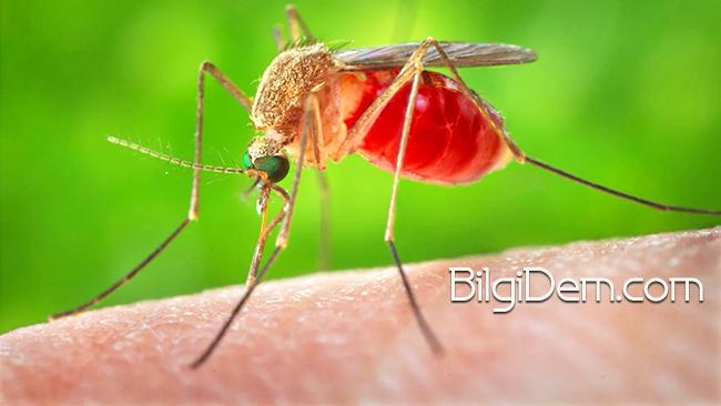 Allah Neden Sivrisineği Misal Verir