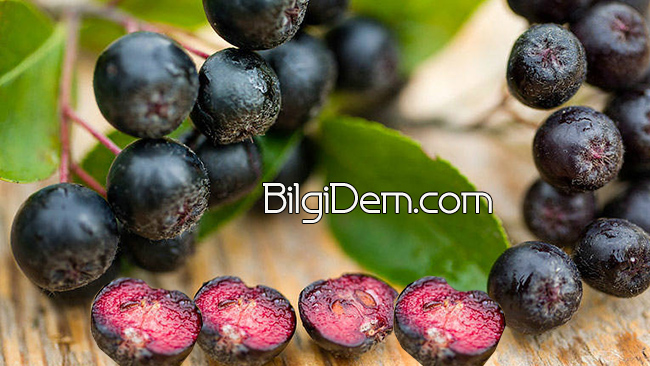 Aronia berry Faydaları Neler?Aronia'nın besin değeri Nedir?