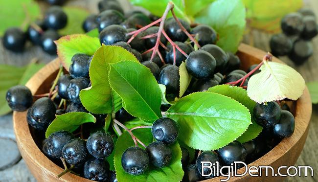 Aronya Meyvesi Nedir?Aroniaberry ile Blueberry'nin Farkı Ne?