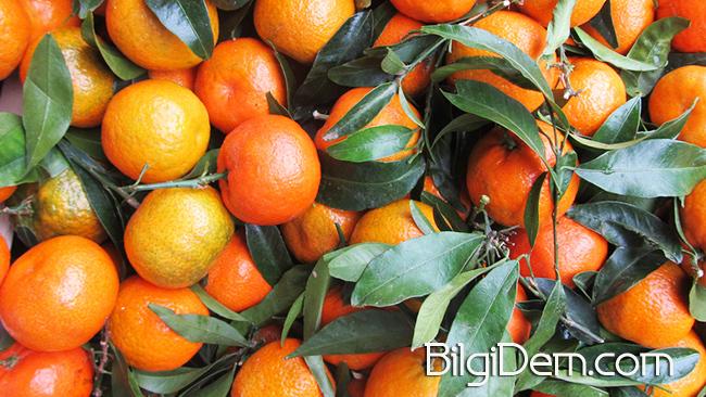 Citrus reticulata - Mandalinanın FaydalarıCitrus reticulata - Mandalinanın Faydaları