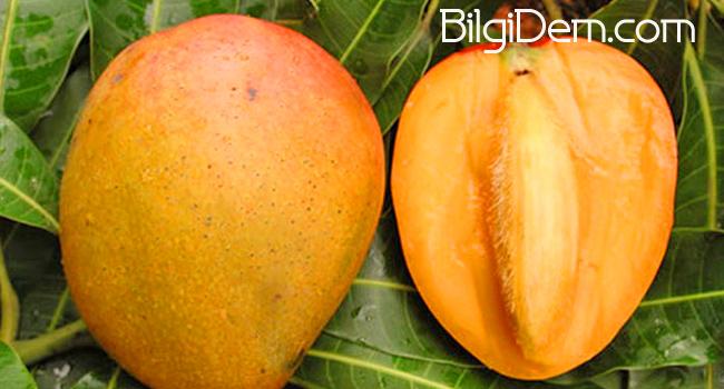Mango Meyvesinin Faydaları Nelerdir? Mango Nasıl Kesilir