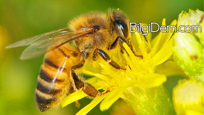 Balın Ve Arının Sırları