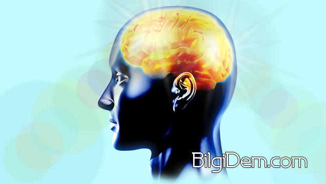 Hafızayı Ve Beyni Güçlendiren Şifalı Bitkiler