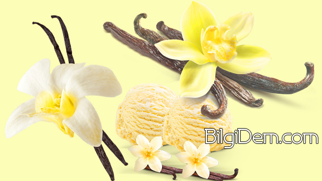 Vanilya nedir? Vanilin Nedir? Vanilya'nın Faydaları