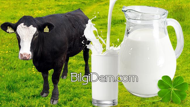Sütün Besin Değeri- Sütteki Vitamin ve Mineraller