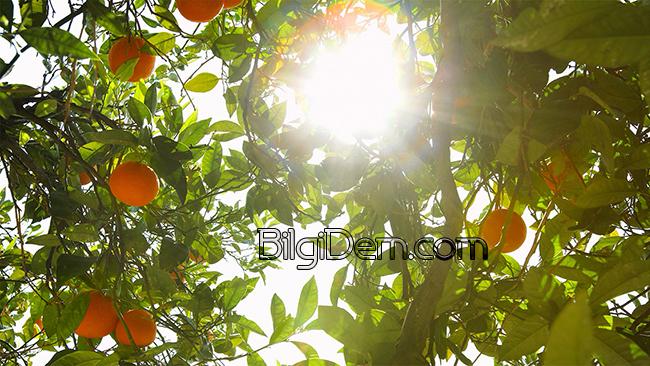 Cildi Güneşten Koruyan En İyi Gıdalar
