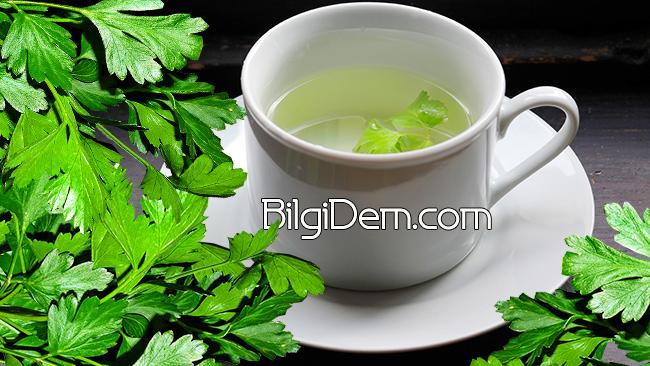 Maydanoz Çayı Nasıl Yapılır? Ve Maydanoz Hakkında Bilgiler!